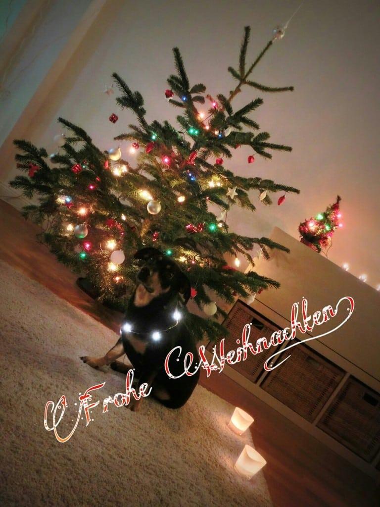 Weihnachtsgrüße - Frohe Weihnachten euch allen