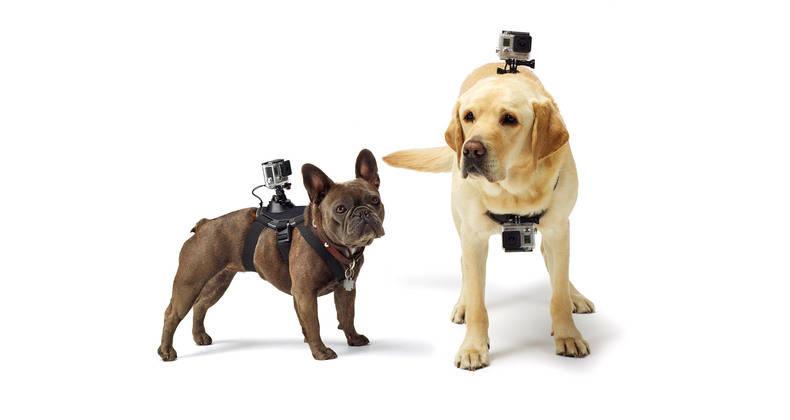 Hundegeschirr GoPro Fetch