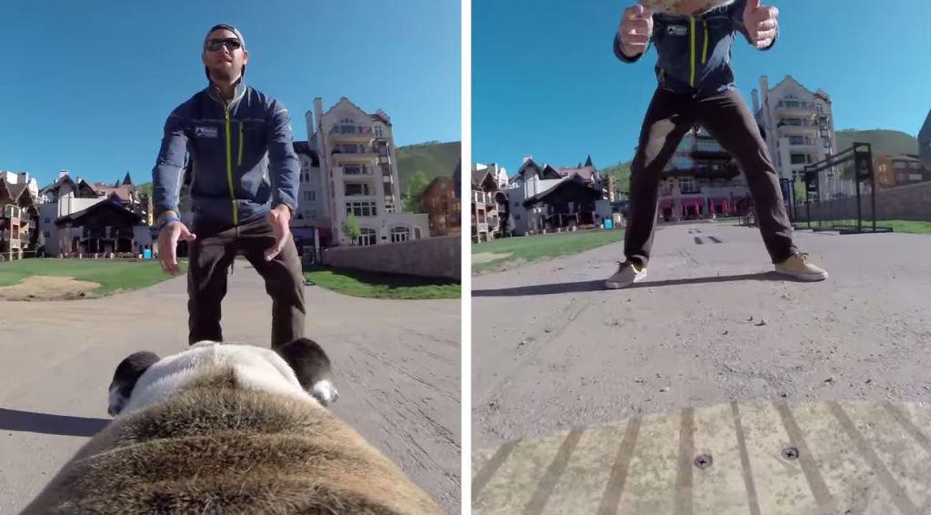 goPro Fetch Hundegeschirr Perspektiven