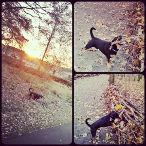 Morning Run mit Benny