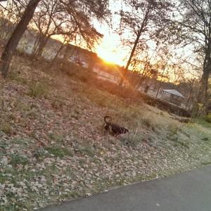 Wakeup Run mit Benny