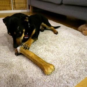 Benny und sein Knochen