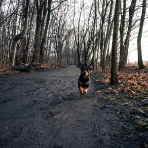 Benny im Wald 1