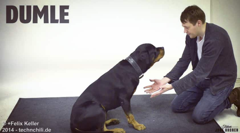 Verrückte Hunde Magier zauber für Hunde