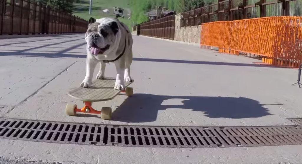 Fetch Hundegeschirr